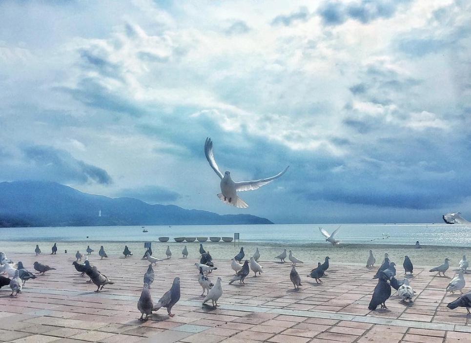 Địa điểm du lịch Đà Nẵng 14