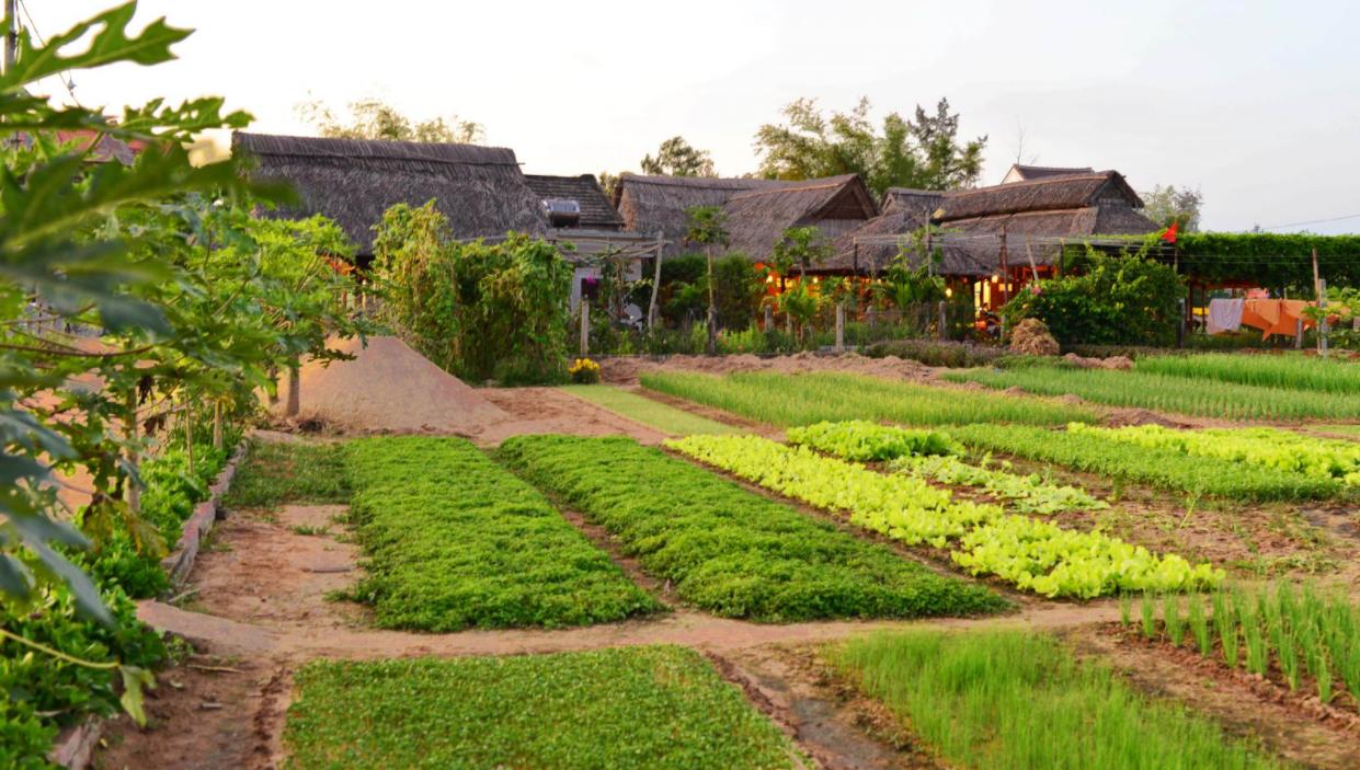 Địa điểm du lịch Quảng Nam 2