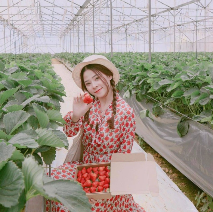 du lịch sapa tháng 2 thu hoạch dâu tây