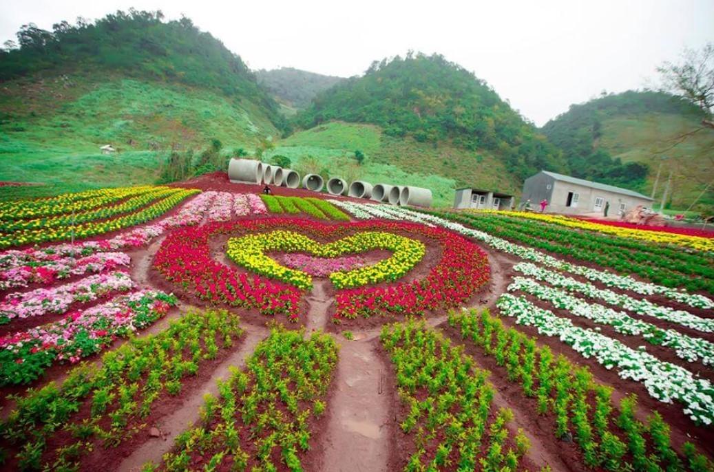 Vườn hoa nhiệt đới Mộc Châu 1
